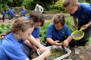 Pond dipping with Sageston